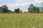 Impoverished lowland hay meadows